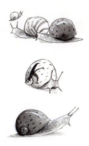 snails drawn by Gabriel Evans