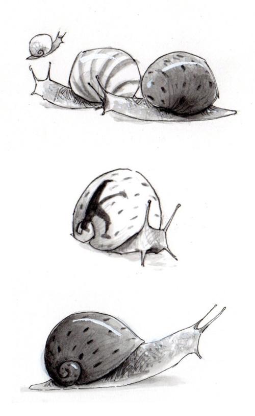snails drawn by Gabriel Evans