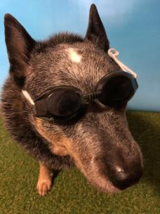pepsi goggles